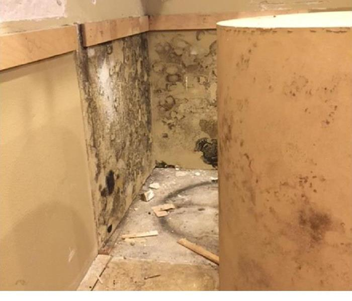 Mold Loss in Cleveland Heights Ohio